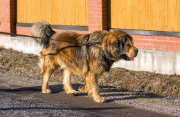 Держать крупных собак в квартирах предложили запретить