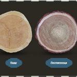 Виды древесины и их применение в строительстве дома