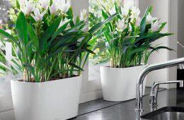 Правильное украшение комнаты с помощью кашпо для цветов