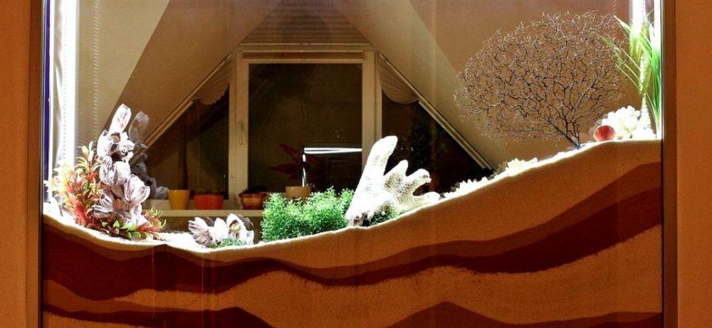 Сухой аквариум в интерьере: типы, варианты декораций