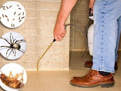 Как вывести тараканов из жилища человека