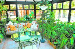 Оранжерея в доме