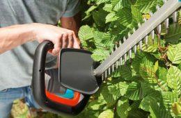 Как ухаживать за живой изгородью?