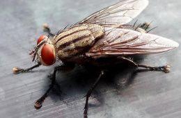 Эти домашние средства помогают от мух